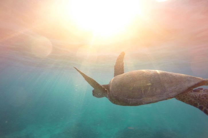 Wie Menschen sich dir öffnen Geschichte Schildkröte
